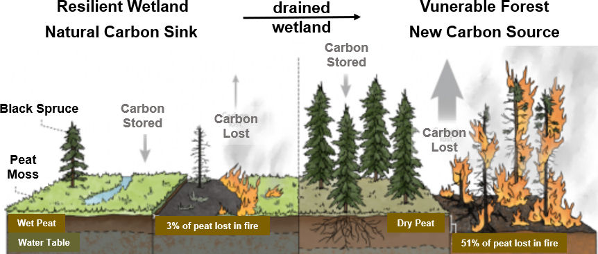 Figure showing how the depth of the water table can influence the impact of forest fires on landscape.