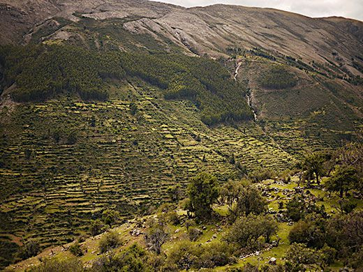 Photograph showing terrain formed by historical terrace agriculture