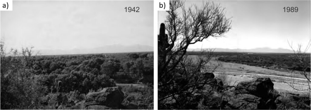 Photos showing loss of riparian vegetation where the water table declined